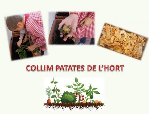 Conreem i mengem les patates de l'hort -4t