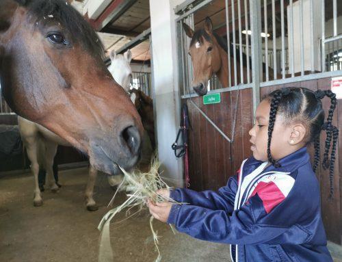 El poni i l'esport – P4 –